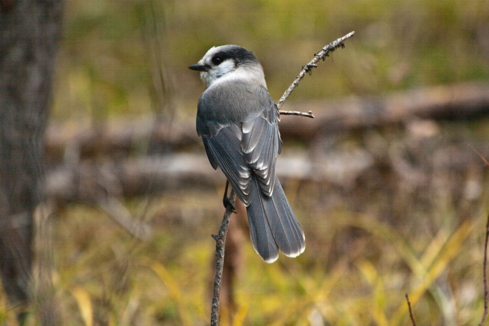 birdsm-35-of-1