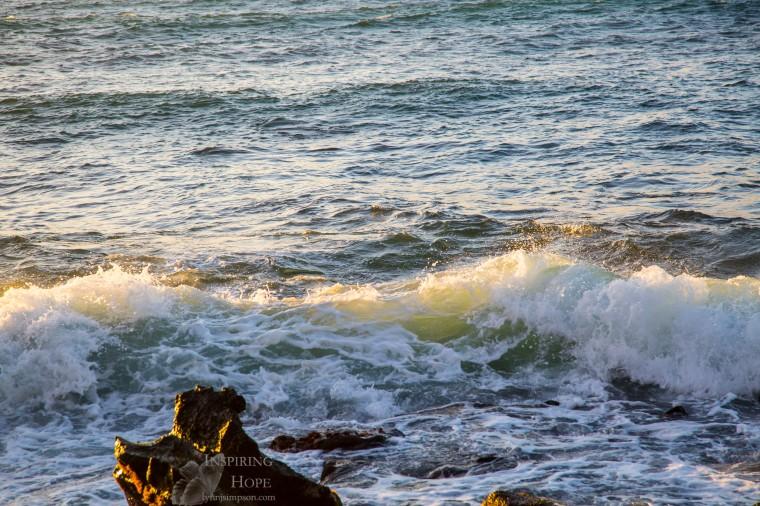 turtle-waves